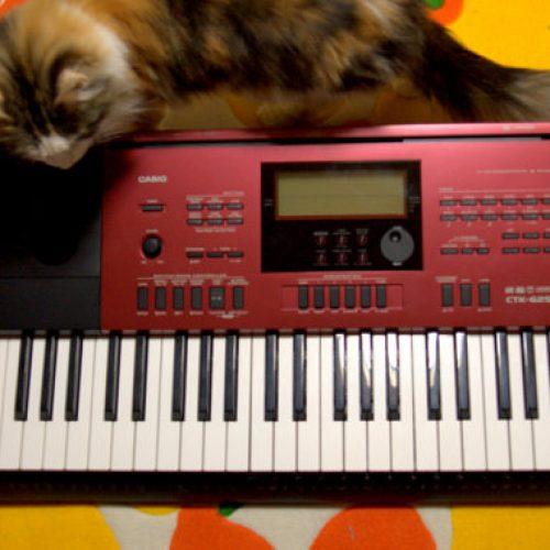 Những cây đàn organ tốt nhất vừa học vừa giải trí